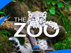 AP The Zoo